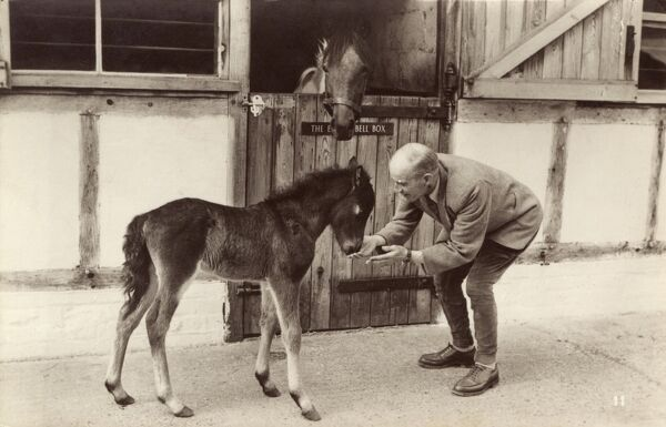 Young foal and owner at a stables, with the Mother in the stall at the rear. Date: circa 1930s