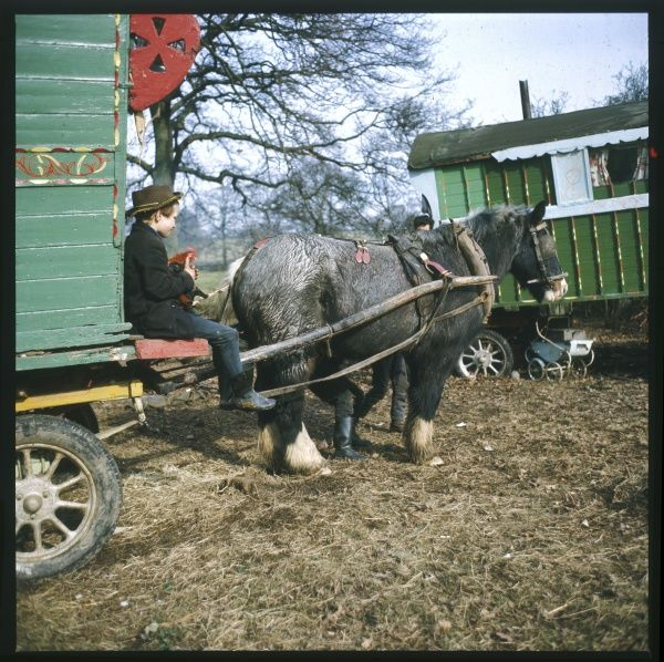 A young gypsy lad sits on the running board of his family caravan as the ponies are kitted out for travel at this encampment in Surrey