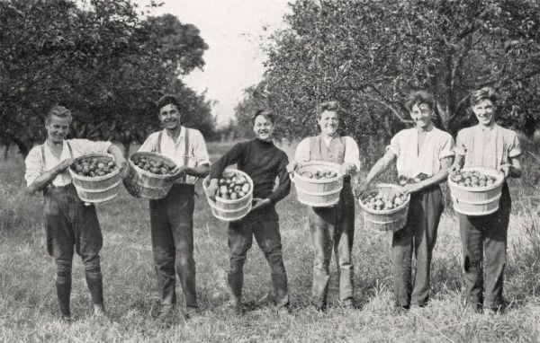 A group of six young men picking apples in an orchard. The location is a Salvation Army Training Centre preparing them for overseas duties with the organisation
