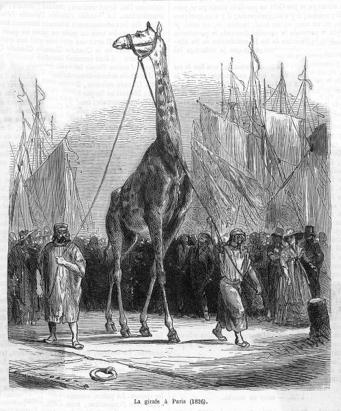 Zarafa the giraffe arrives in Paris, a gift to Charles X from the Viceroy of Egypt
