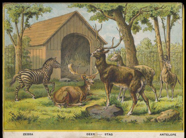Regent's Park zoo, London Visitors admire the zebra, deer, stag and antelope