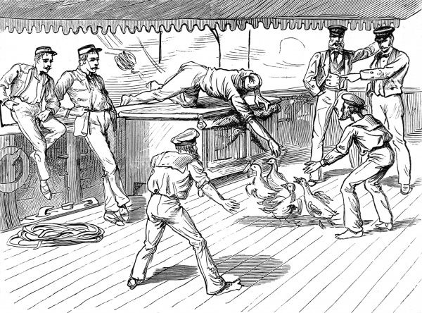 Livestock get loose; soldiers on deck trying to round up the chickens