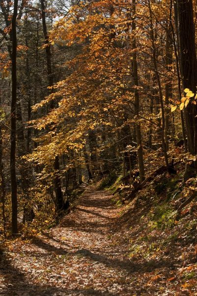 The Appalachian Trail (AT) in autumn Date