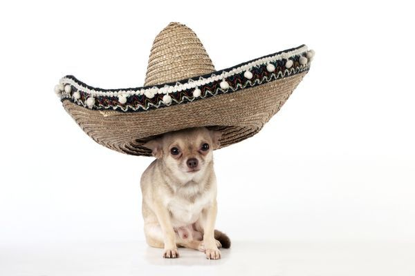 mexican hat milfs dating site Mexican cupid has more hot mexican singles than just about any latin dating site on the  the bottom line is that mexican dating can hold great variety for the.