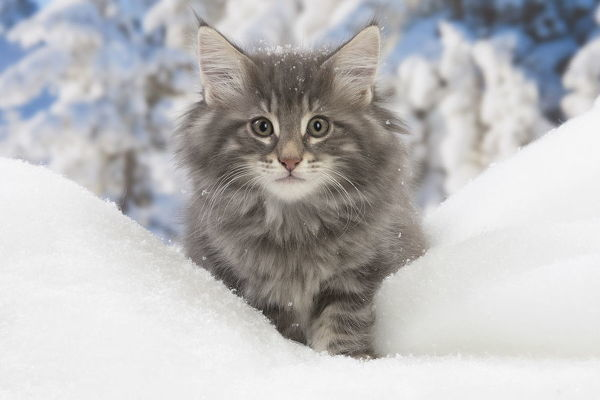 Pin on Christmas≈≈GIF  |Winter Scenes With Cats