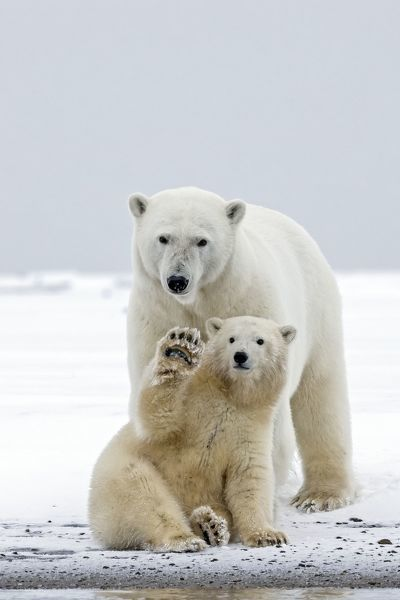 Bear and cub dating in Melbourne