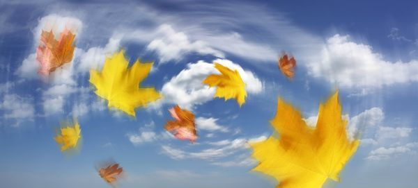 Autumn Leaves Blowing In The Wind Conceptual Image 6312641