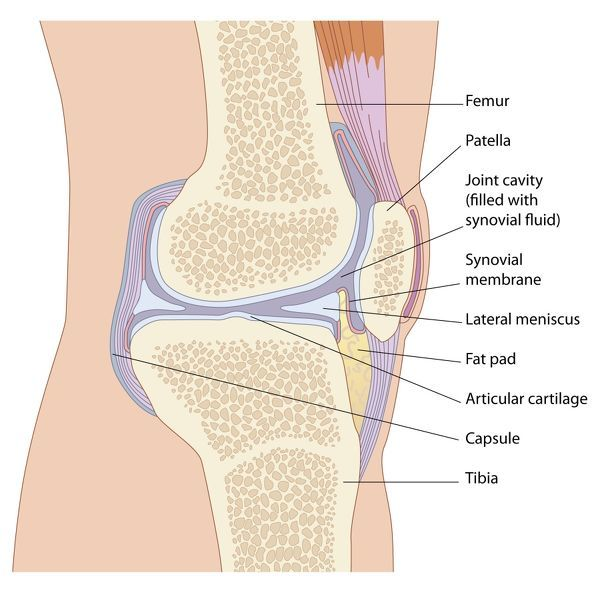 Knee joint anatomy, artwork - Artwork of the anatomy of the knee ...