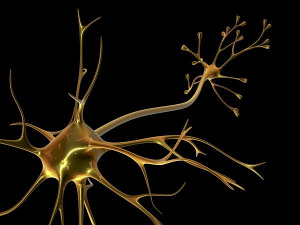 Nerve cell. Computer artwork of a nerve cell, also called a neuron ...