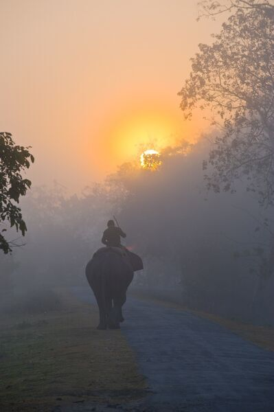 Elephant in the fog below the rising sun, Kaziranga National Park, UNESCO World Heritage Site, Assam, India, Asia