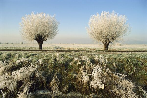 Frost covered trees and landscape, Whittlesy, near Peterborough, Cambridgeshire, England, United Kingdom, Europe