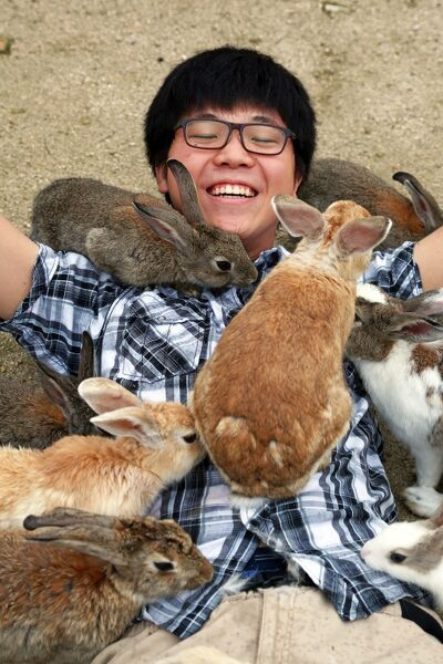 the rabbits Rabbit internet is the company that focusing on internet business that can improve their urban life.