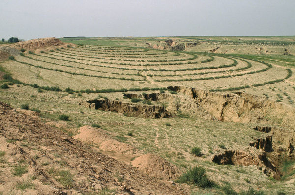 10028143. CHINA Agriculture Contoured planting showing erosion