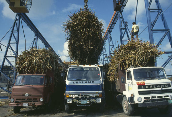 10046359. WEST INDIES Jamaica Industry Sugar cane being unloaded from trucks at refinery