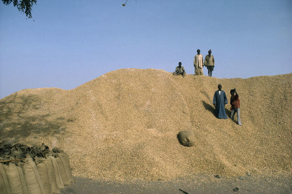 20075204. GAMBIA People Children Children on top of groundnut heap