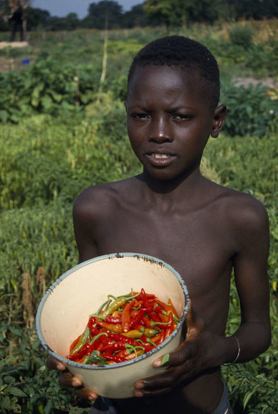 20075220. GAMBIA Agriculture Boy holding bowl of chillies