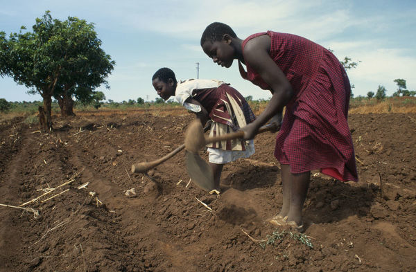 20076269. MALAWI Farming Girls working in fields near Lilongwe