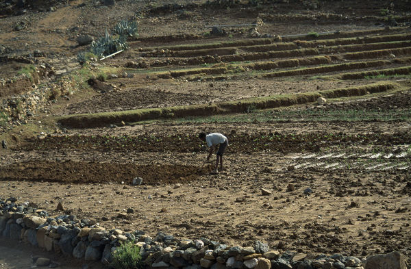 20078667. ERITREA Keren Province Man tilling soil by hand on small irrigated farm