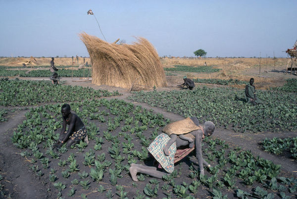 Sudan Dinka tending tabacco crop, woman carrying a child on her back in the foreground