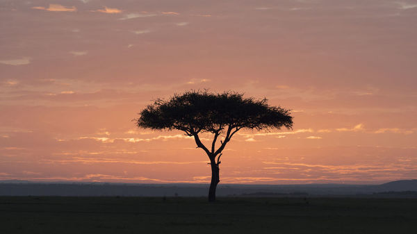 Africa Kenya Amboseli National Park Sunrise Backlights Umbrella