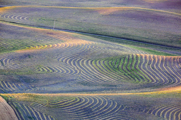 North America;USA;Washington State;Palouse Region;First light on freshly swathed Pea fields