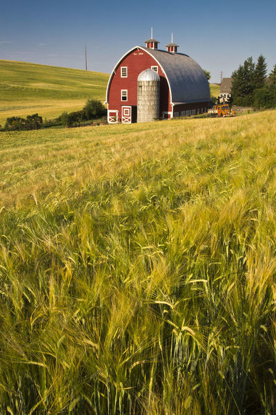 North America;USA'Washington;Red Barn in Field of Harvest Wheat