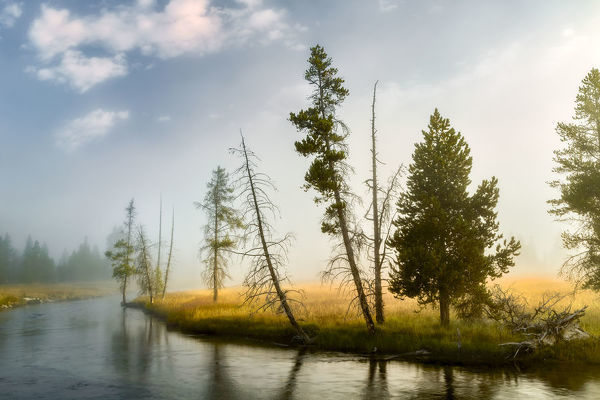Trees and mist at sunrise along Firehole River,, Upper Geyser Basin, Yellowstone National Park, Wyoming/Montana