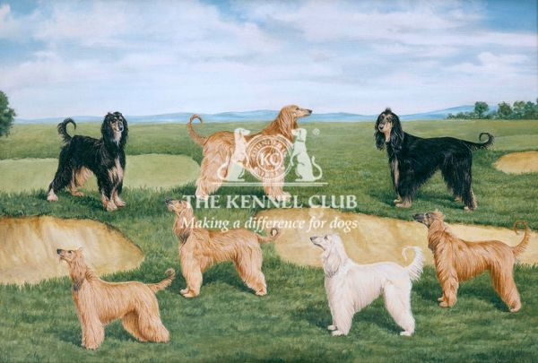 Signed Oil on canvas This painting shows the Acklam Afghan Hounds bred by Mrs Howard Gibson. Ch Mitzou of Acklam is the top centre hound, shown with her litter, whelped in May 1946. The hounds are (clockwise) Ch Mitzou of Acklam, Ch Tanza of Acklam