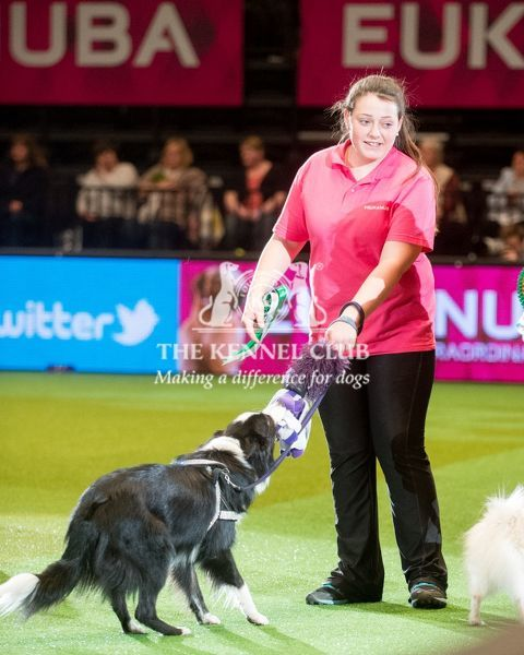 Agility YKC 2nd Shannon Springford with Shansdream Angels Delight