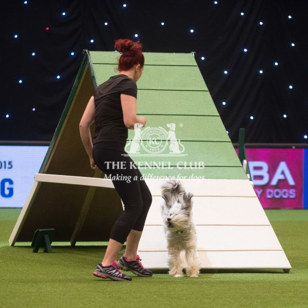 Ashley and Pudsey from Xfactor fame compete in Crufts Singles Agility