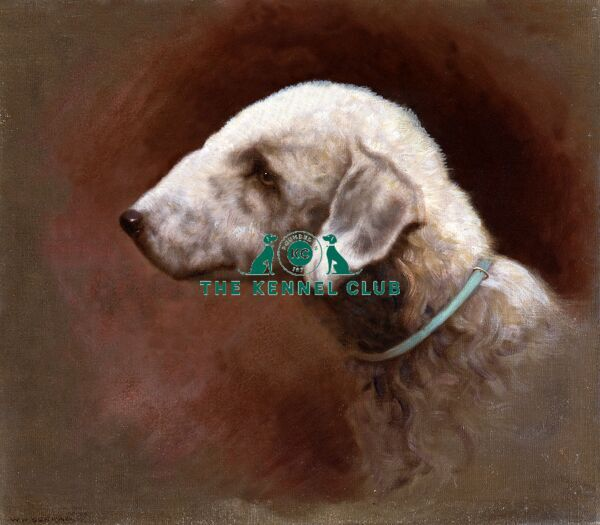 Canvas 13 x 15.5 ins, signed The Bedlington Terrier is rarely represented in art and this is a particularly fine portrait of a breed whose roots are with the poachers and tinkers of Northumberland. The artist W H Durham lived at Sydenham in London