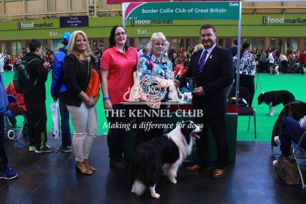 border collie best of breed stand