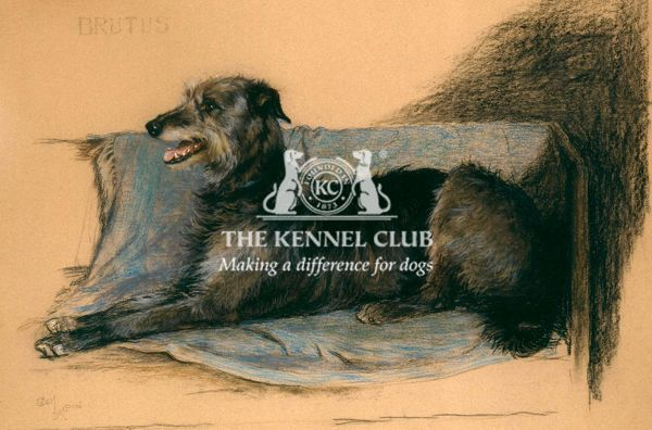 Signed Pastel 41 x 28.5 This particularly fine portrait of the Deerhound, Brutus of Bridgesollers, was a gift to Agnes Linton from her father, who reputedly commissioned Aldin to paint the picture
