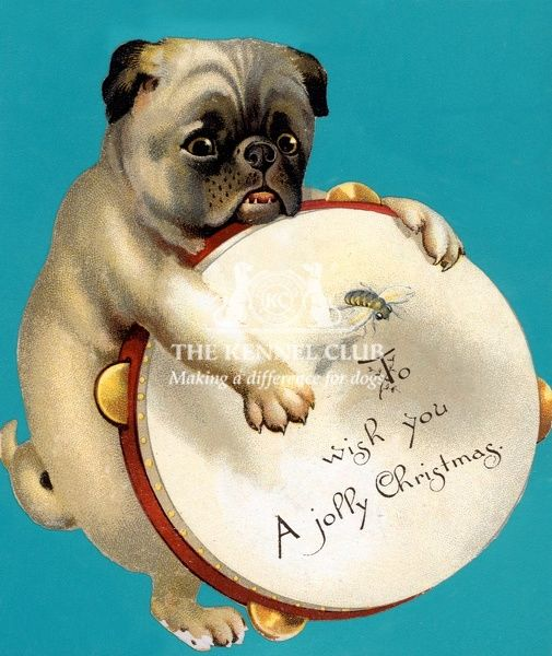 a pug playing a tamborine