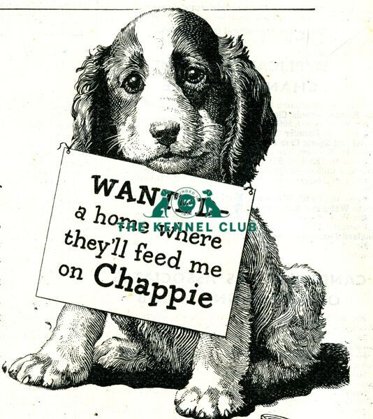 1946 Kennel Gazette advert featuring Chappie dog food   'Wanted a home where they'll feed me on Chappie'