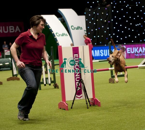 Picture shows Jo Sampson with her Hungarian Vizsla, Kira during the large agility finals in the main ring today (Friday 06.03.15), the second day of Crufts 2015, at the NEC Birmingham