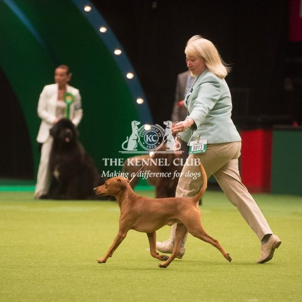The Kennel Club Crufts 2015
