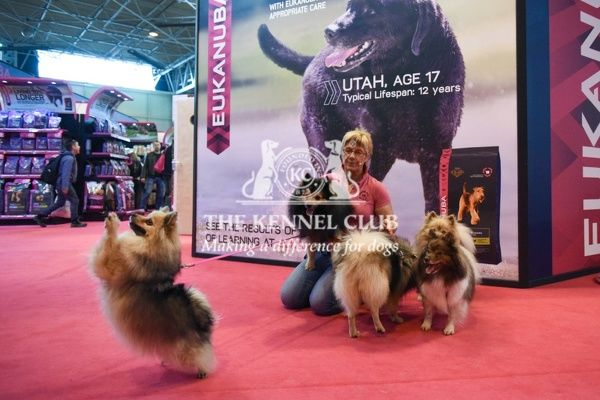 Nikki and Pomeranian on Eukanuba stand