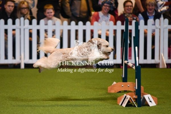 Crufts 2016. Agility 18-24 years in the YKC ring