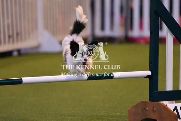 Agility 18-24 in the YKC ring