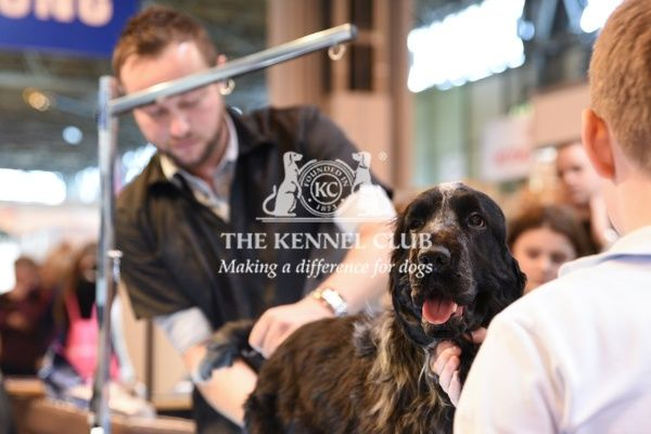 Crufts 2016. Grooming demo with award-winning groomer Mike Wildman on Dog World stand
