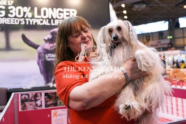 The Chinese Crested Club of Great Britain Rescue by the Eukanuba stand