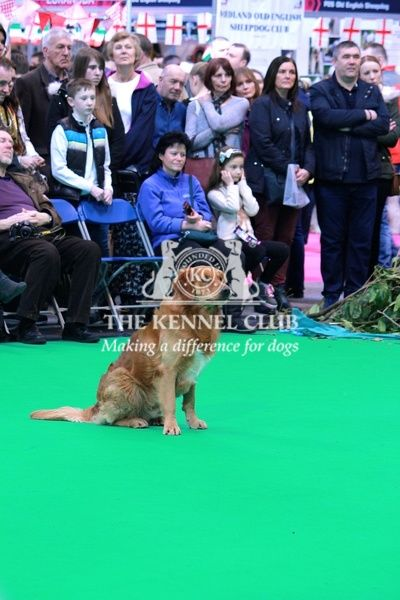 The Kennel Club Ltd. Crufts 2016