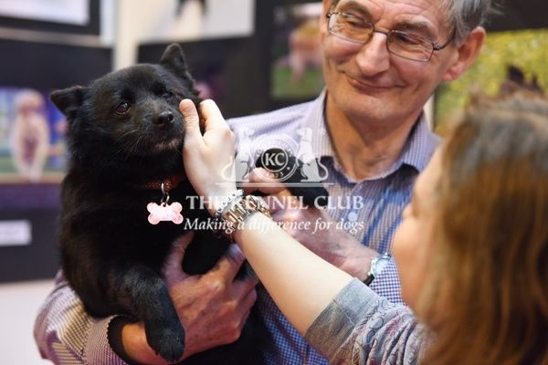 Schipperke in Discover Dogs, Crufts 2016