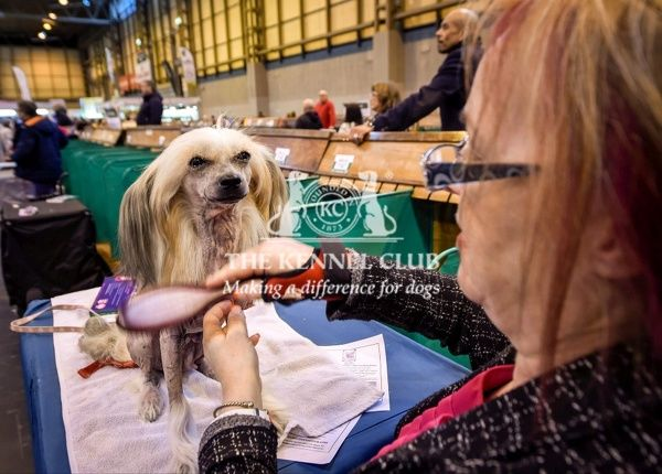 Picture shows Jill Inwood with Lucy a Chinese Crested, (Thursday 10.03.16), the first day of Crufts 2016, at the NEC Birmingham