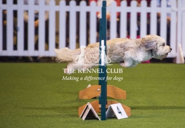 Picture shows YKC Ring - Competitors in the Agility 18-24 years , the first day of Crufts 2016, at the NEC Birmingham