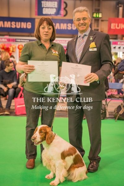 Paul Rawlings, Chairman of the Working Gundog Certificate Working Party awards a certificate to Ms Tina Smith for her dog Isfryn Hocus Pocus