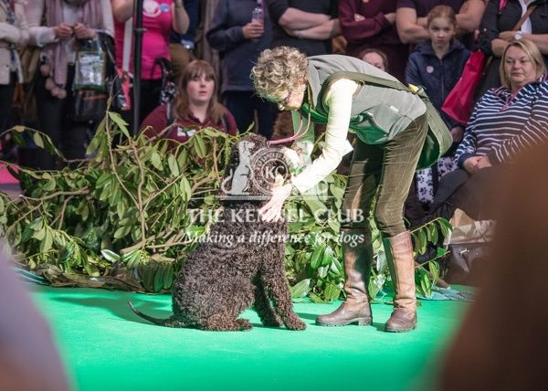 Philippa Williams and her Gundog display team in the Dog Activities Ring on Day 2 of Crufts 2016