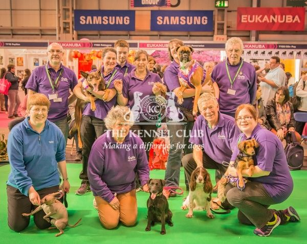The Agility Team   Back Row L to R - Mike (team Leader), Helen (with BB), Jonathan, Hannah, Serina (with Lola),Tony   Front Row - L to R - Jo (with mexican Hairless), Angela (with Patterdale called Indy), Chris (with Springer called Lula) and Emily