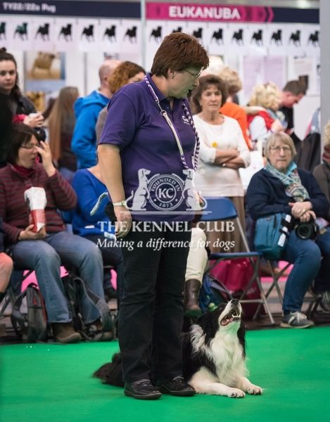 Kerry and her dog, Taggy, the Border Collie taking part in the Dog Activity Ring (Obedience) during Day 2 of Crufts 2016